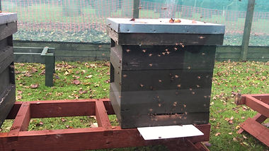 Bees flying in November