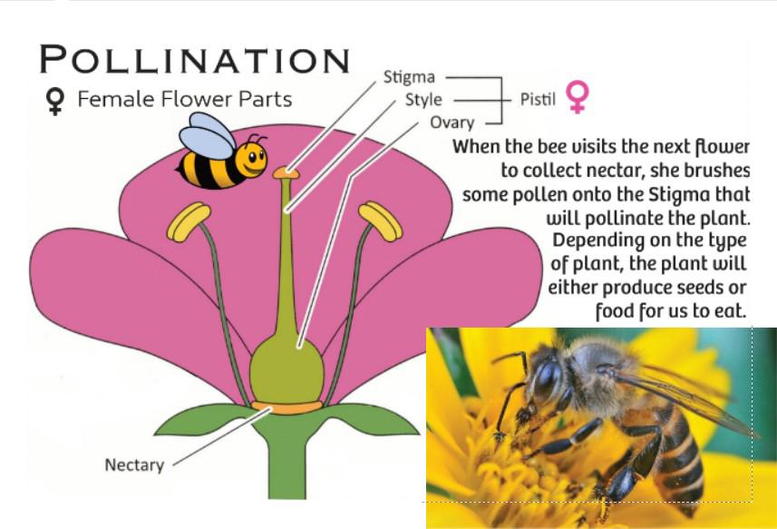 Flower Female