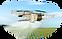 Drone Spraying.png