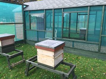 First Bees 3.jpg