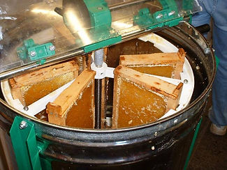 Honey Processing.jpg