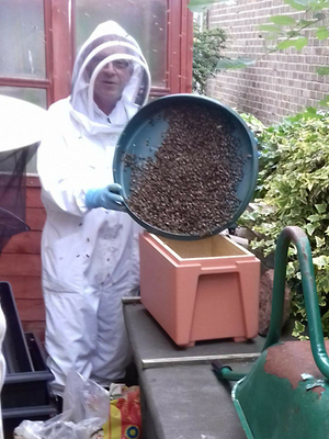 Swarm Collection in Selby