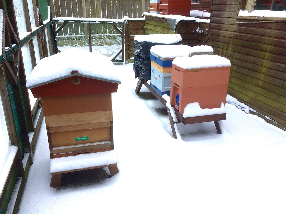 Checking hive entrances are clear of snow