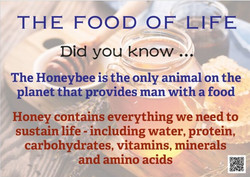 The Food Of Life