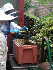Collecting a swarm from a Compost Heap