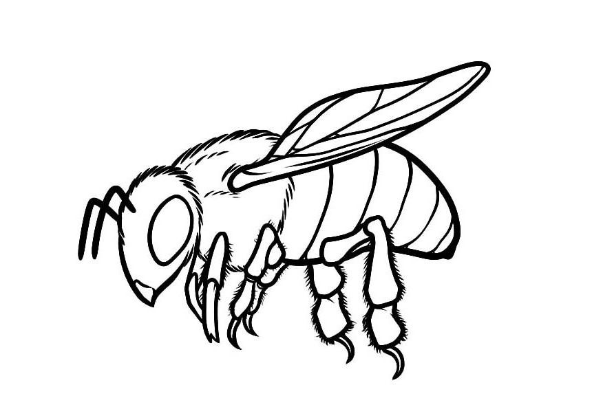 Honeybee 1