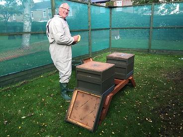 First Bees 1.jpg