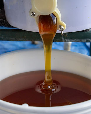 Honey Processing 2.jpg