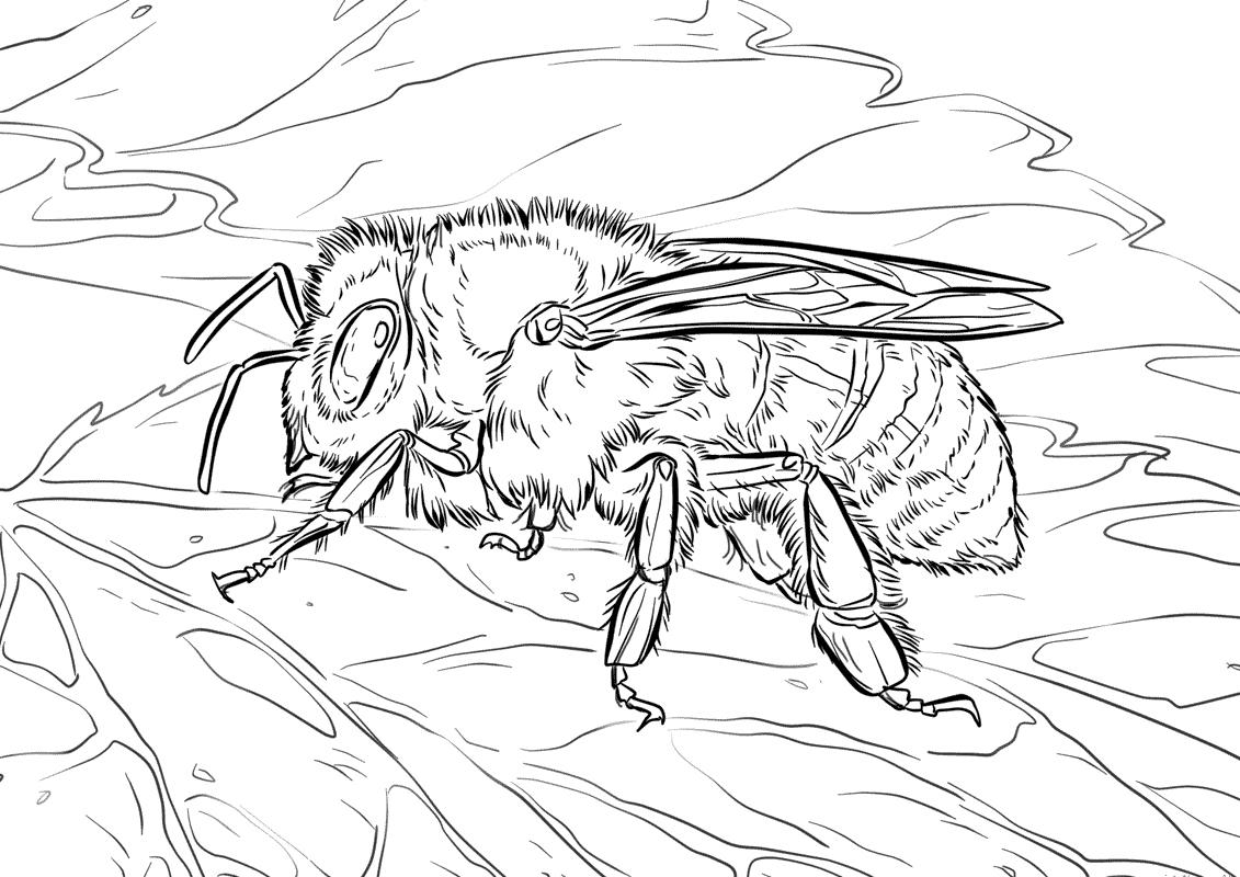 Honeybee 5