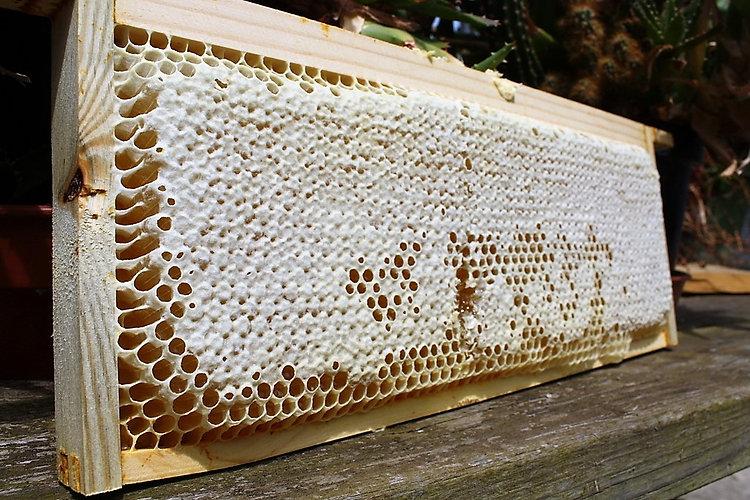 HoneySuper.jpg