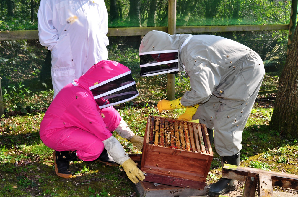 Apiary Session