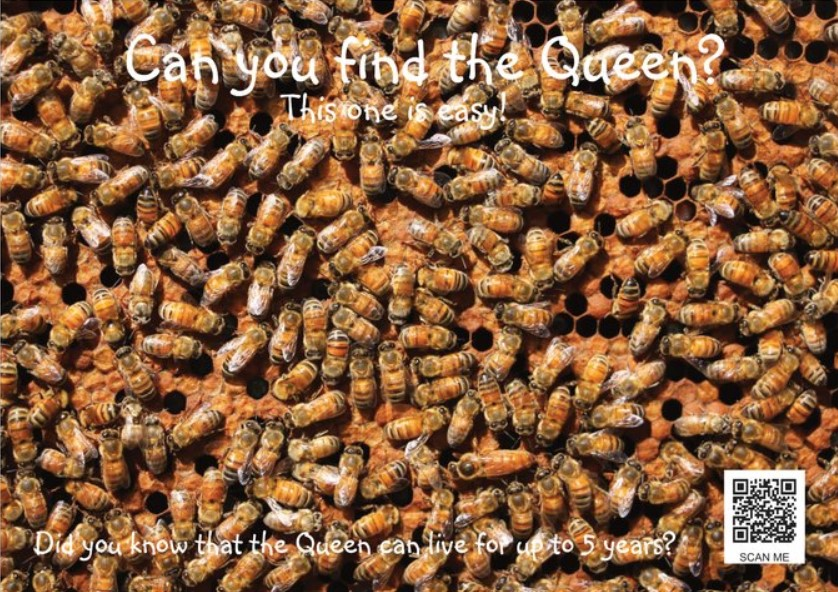 Find Queen - Easy