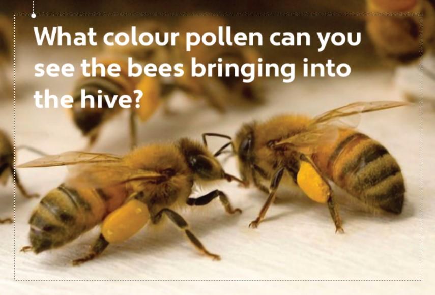 Pollen Baskets