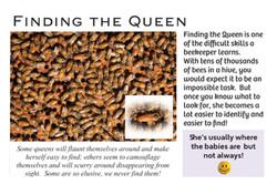 Finding Queen