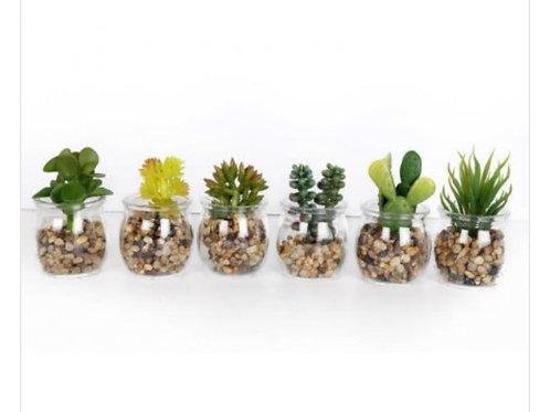 Succulent in glass pot