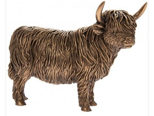 Angus the bronzed highland cow