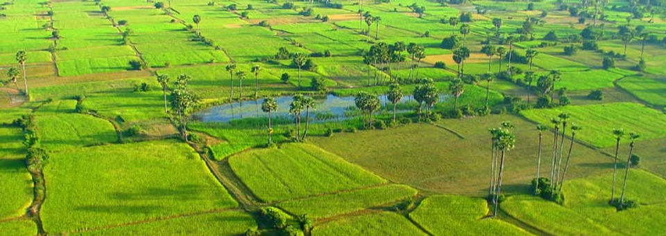 Rice Fields Cambodia 1.jpg