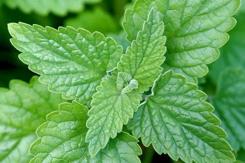 529-Bulk Catnip Leaf & Flower, Organic, 1 lb.