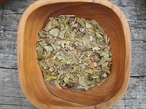 2571-Bulk Uva Ursi Leaf, Whole, Organic, 1 lb.