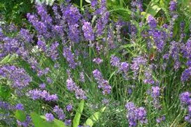 594-Bulk Lavender Flowers, Whole, 1 lb.