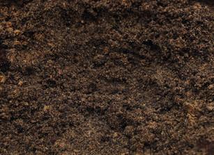 Dirt Prayer