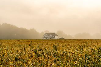bellville_farm-6.jpg