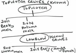 Topnotch & Lowblow