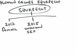 Squarecut