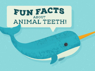 Fun Facts About Animal Teeth!