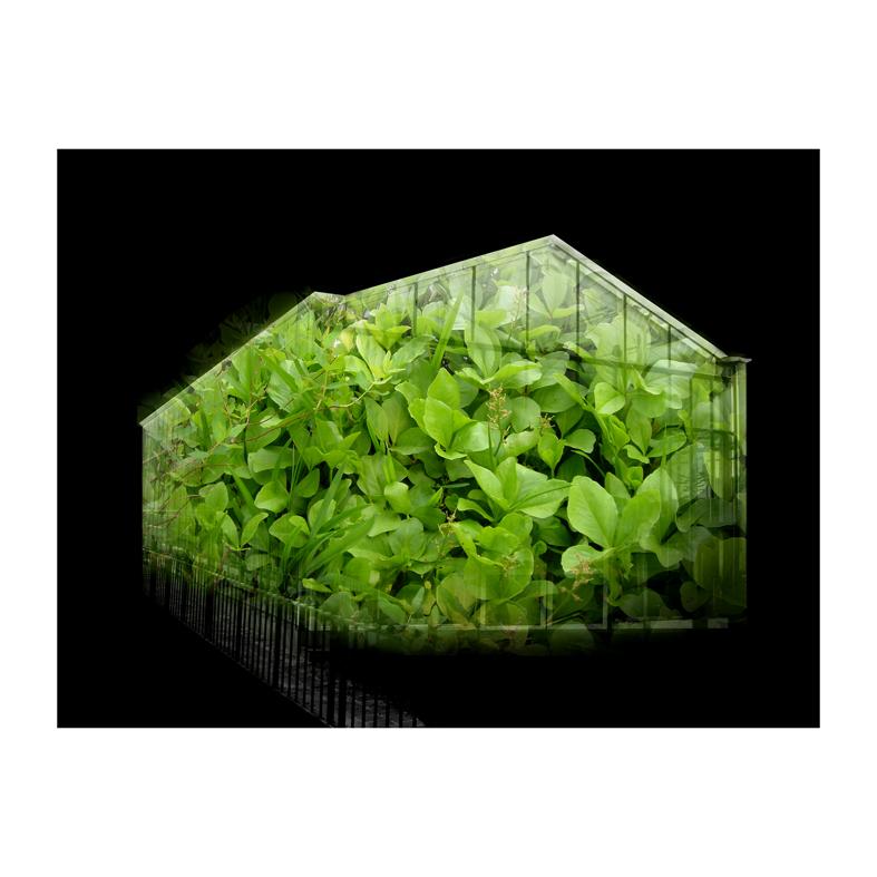 Invernadero VI Foto digitalizada 47cm por 47cm Zulema Maza 2008.jpg