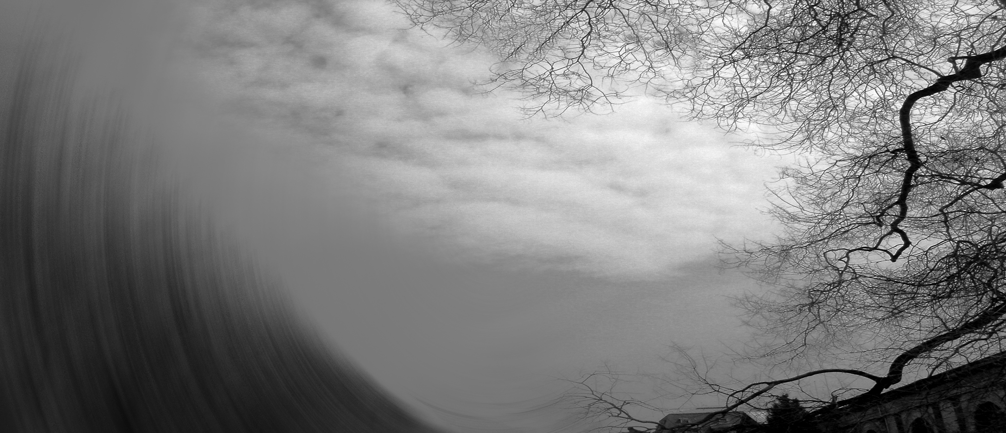 M Arbol III Fotografia digitalizada 70cm x 162cm Zulema Maza.jpg