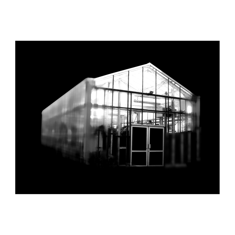 Invernadero VIII Foto digitalizada 47cm por 47cm Zulema Maza 2008.jpg