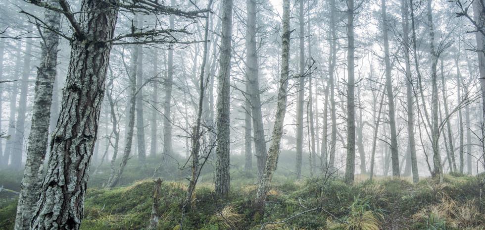 Ecosse_glen affric