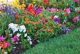 Busy-lizzie-plants-007.jpg