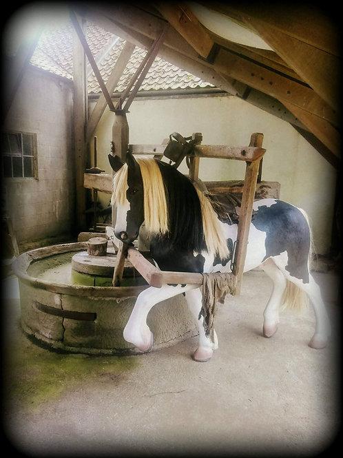SPONSOR OUR MODEL HORSE !