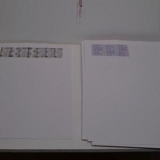 Silicaceae Herbarium Sheets