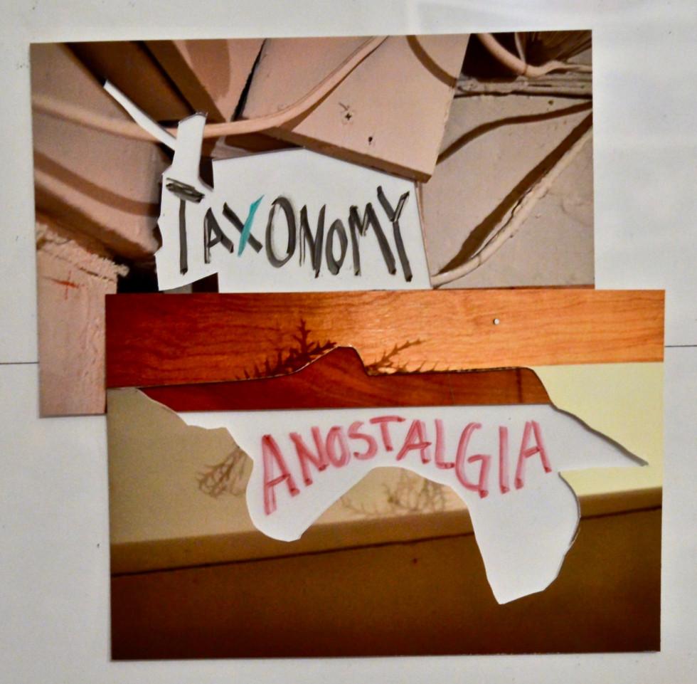 Taxonomy Anostalgia