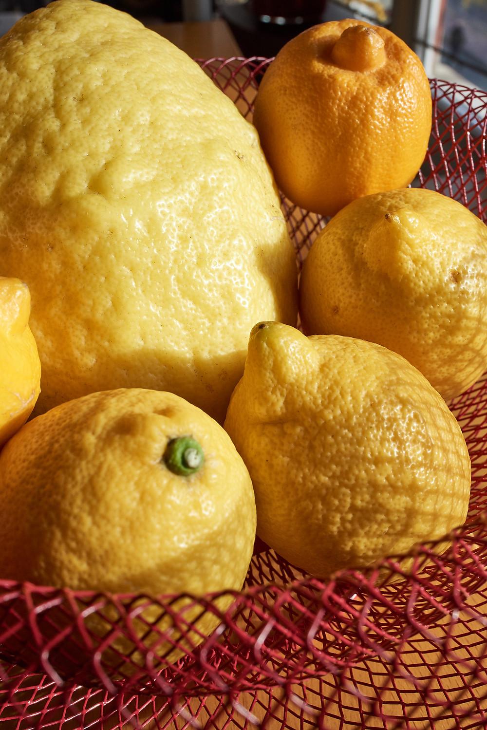 Le gros dodus c'est le cédrat, le petit en haut un peu plus orangé c'est la bergamote, quant aux trois autres ce sont des citrons