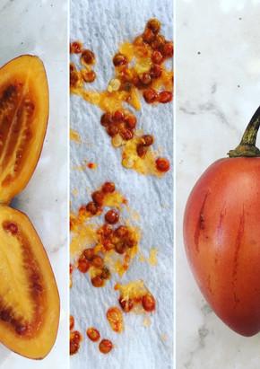 Tomate de Arbol, la tomate originelle. Pérou, tour du Monde Culinaire 2016-2017.