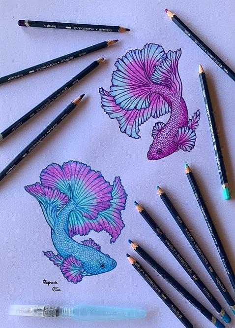 Purple and Aqua Yin Yang Betta Half Moons
