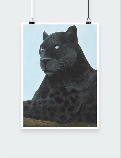 Print - Panther