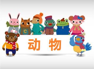 词汇 cí huì:动物 dòng wù | Vocabulary: Animals