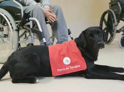 perro-de-terapia-asistida-con-animales-c