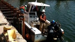 Sport Workboat Dive