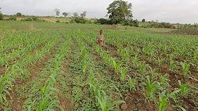 Togo farming.jpg