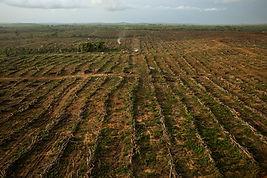 Liberia farmland.jpg