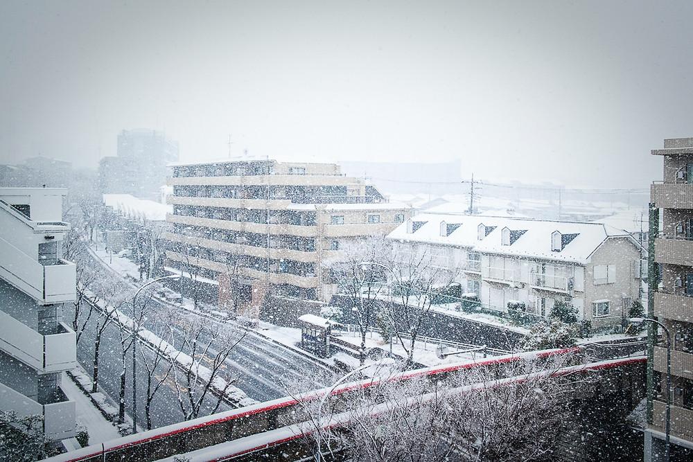 撮影 雪の朝