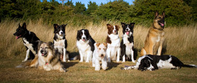 Dogs in field.jpg