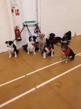 Wroxall Obedience