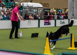 Competing in Rally at Crufts 2.jpg